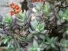 Plants at Boegoeberg